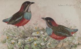 gould birds